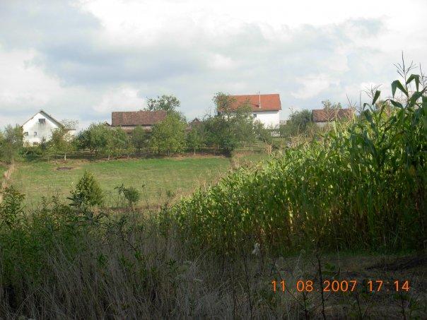 Selo Papici na Baniji