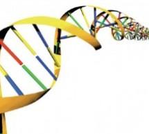 Истраживање: Генетска слика Срба