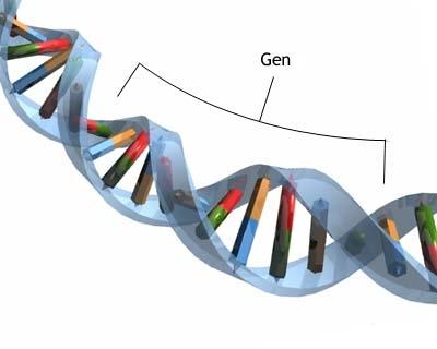 gene-dna