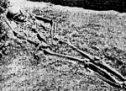 Генетска слика Лепенског Вира и Винче