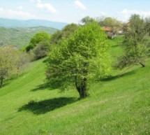 Poreklo prezimena zaseoka Predanča, selo Gornji Dejan (Vlasotince)
