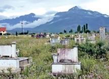 Насељавање Срба Врачана (са севера Албаније) у Метохију