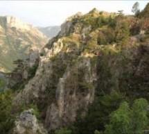 Корјенићи – област, насеља, родови