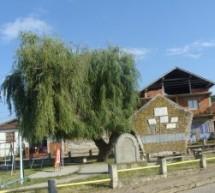 Порекло презимена, село Орашје (Власотинце)