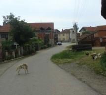 Порекло презимена, село Прилепац (Власотинце)