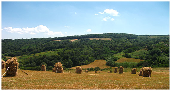 Село Толисавац (преузето са www.tolisavac.iz.rs)