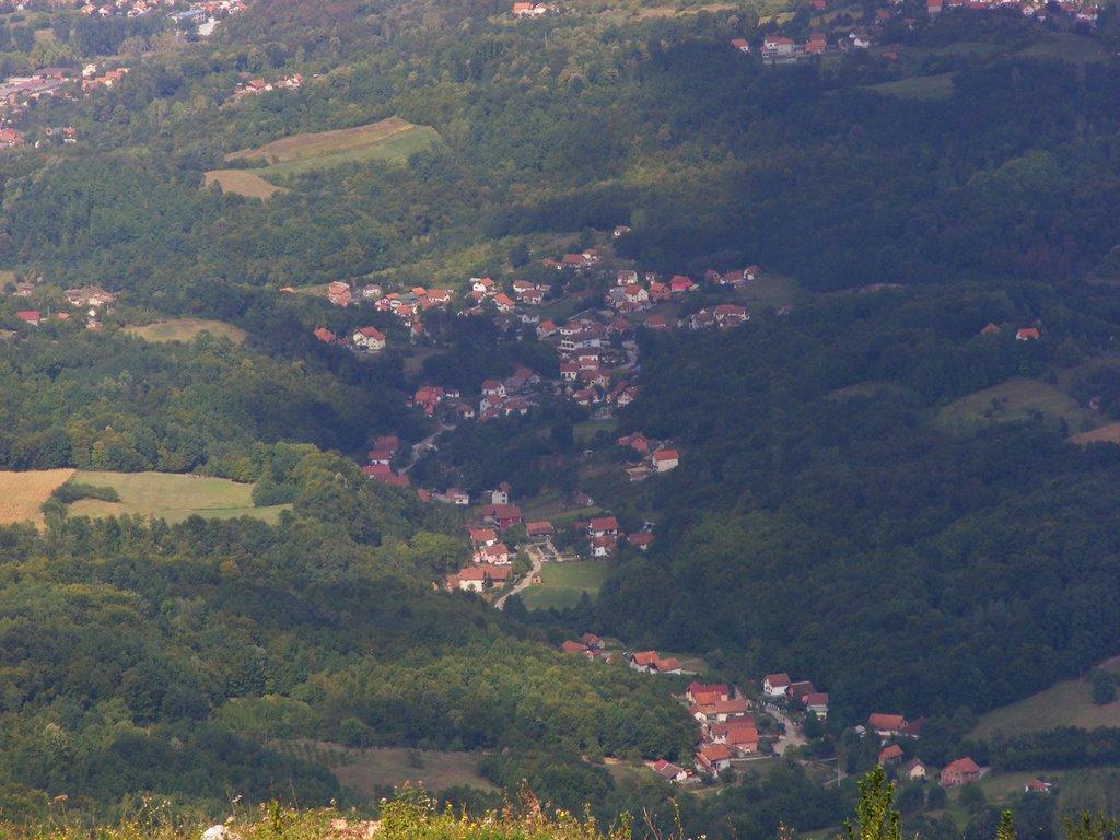 Trbusnica