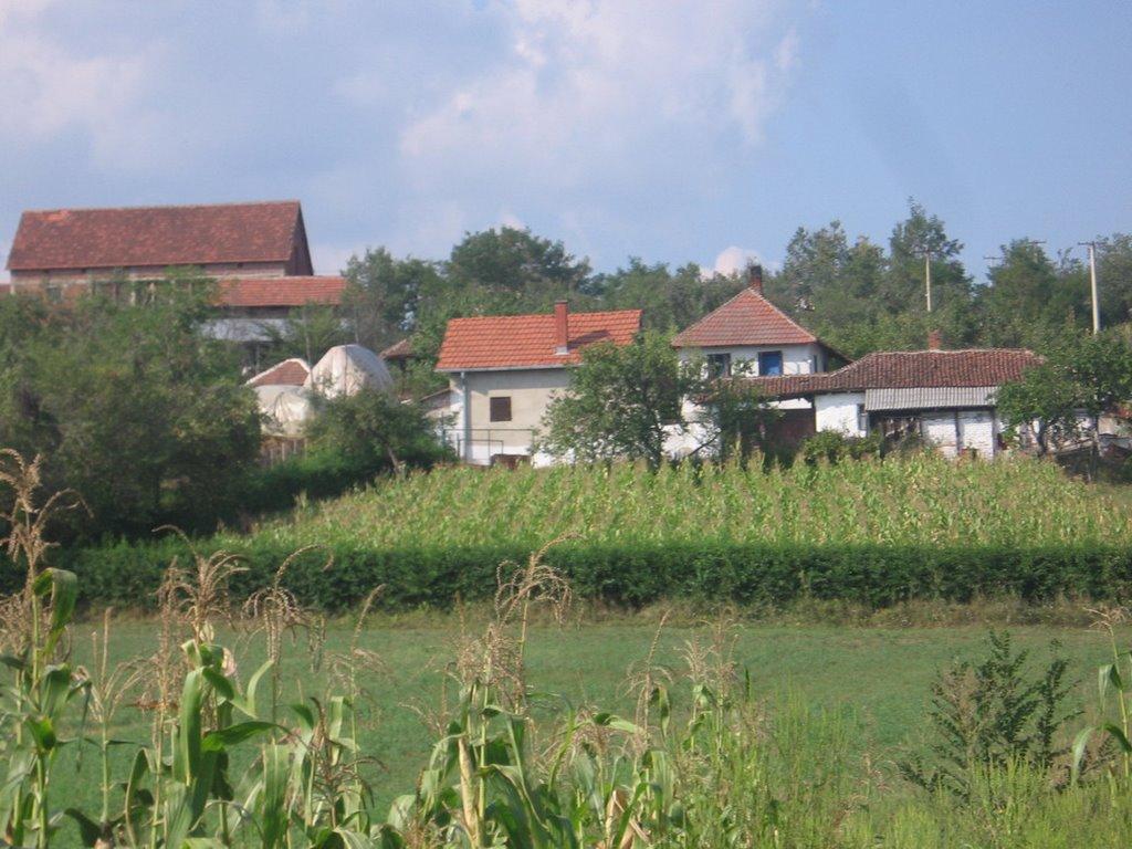 M. Vrbica
