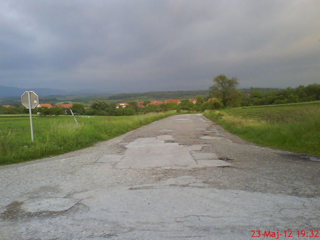 Фото: Марко Богосављевић