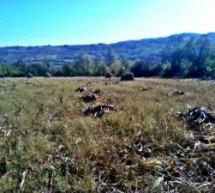 Poreklo prezimena, naselje Korićani (Stanovo-Kragujevac)