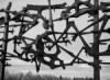 Жртве фашистичког терора у Барањи (1941-1945)