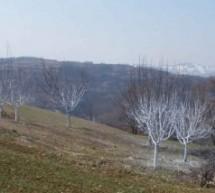 Poreklo prezimena, selo Donji Vratari (Aleksandrovac)