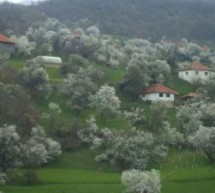 Порекло презимена, село Дреновац (Врање)