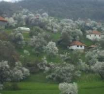 Poreklo prezimena, selo Drenovac (Vranje)