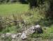 Камени престоли властеле и великаша: Камена столица војводе Ђурјана